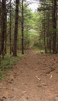 Path through mature woods